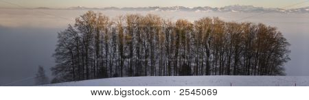 Panorama With Trees And Alps Above Fog