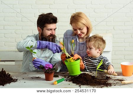 Flower Ground. Work For Whole Family. Child With Parents Cares For Plants Together. Mom, Dad And Son
