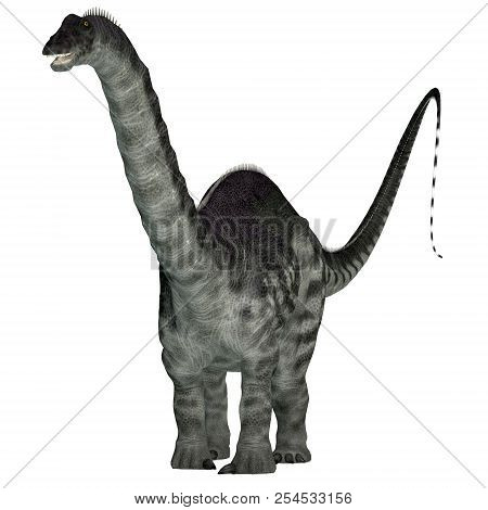 Apatosaurus Dinosaur On White 3d Illustration - Apatosaurus Was A Herbivorous Sauropod Dinosaur That