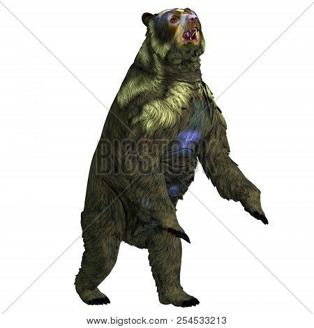 Arctodus Bear Rearing Up 3d Illustration - Arctodus Was An Omnivorous Short-faced Bear That Lived In