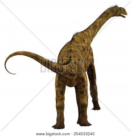 Atlasaurus Dinosaur Tail 3d Illustration - Atlasaurus Was A Herbivorous Sauropod Dinosaur That Lived