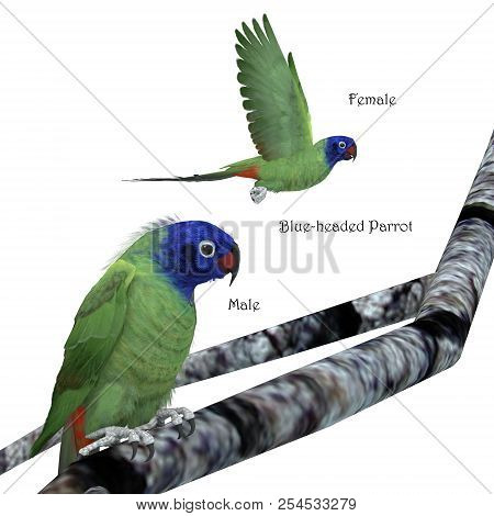 Blue-headed Parrot 3d Illustration - The Blue-headed Parrot Is A Noisy Bird From Central And South A