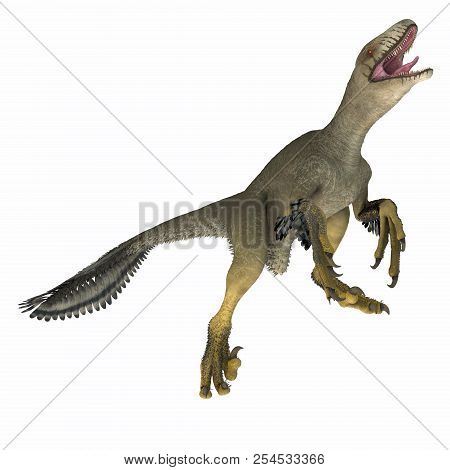Dakotaraptor Dinosaur On White 3d Illustration - Dakotaraptor Was A Carnivorous Dromaeosaurid Therop