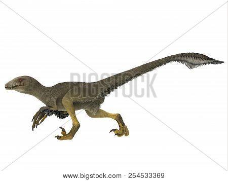 Dakotaraptor Dinosaur Side Profile 3d Illustration - Dakotaraptor Was A Carnivorous Dromaeosaurid Th