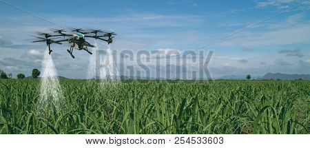 Iot Smart Agriculture Industry 4.0 Concept, Drone (in Precision Farm) Use For Spray A Water, Fertili