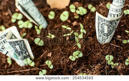 Dollar Bills Growing Our Of Organic Earth With Sprouts Conceptual Financial And Banking Growing Your