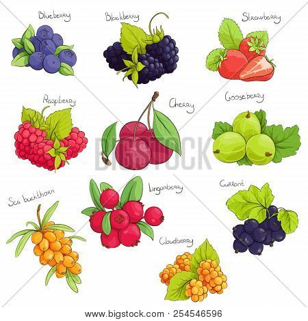 Some Sweet Vector Berries On White Background