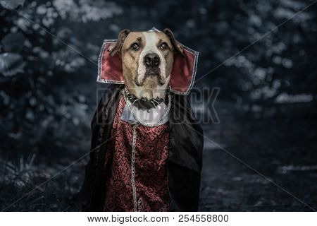 Portrait Of Funny Dog Dressed Up For Halloween As Dracula Vampire In Dark Moonlit Forest. Cute Serio