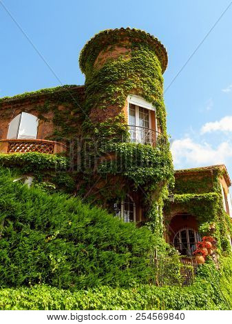 Clambering Plant On The Exterior Wall Of The Old House At The Cannes.