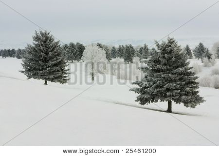 Winter Frost I