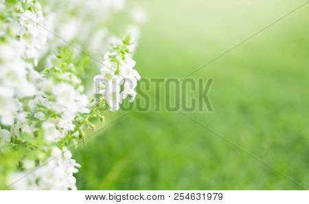 Close Up Beautiful White Flower On Greenery Grass Background In The Garden For Wallpaper Copy Space