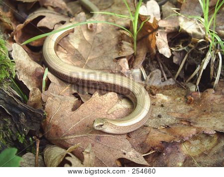 Snake In The Forest