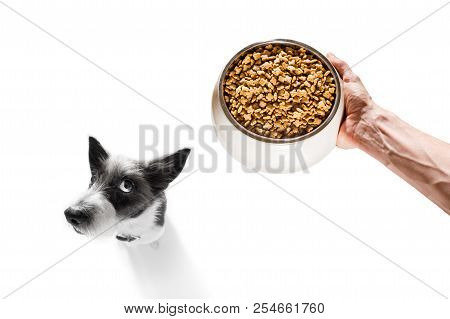 Curious Dog Looking Up To Owner Waiting Or Sitting Patient For The Meal In A Food Bowl,  Isolated On