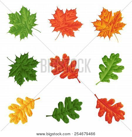 Green, Red And Yellow Leaves Isolated On White Background. Set For Seasonal Natural Decor.leaf Green