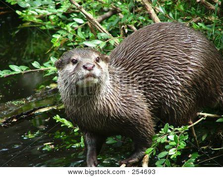 Otter - 5