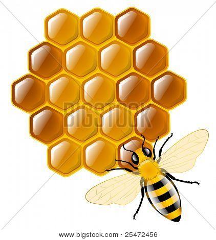 Honey bee and honeycombs
