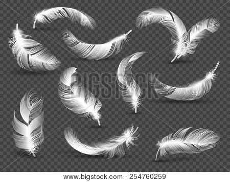 White Feathers. Fluffy Twirled Feather Isolated On Transparent Background. Realistic Vector Set Of B