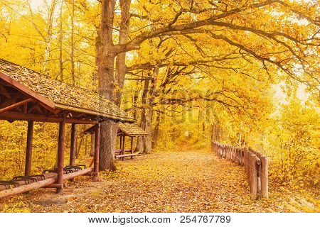Beautiful Bright Autumn Background. Yellow Autumn Trees In Enchanting Autumn Forest. Autumn Leaves F