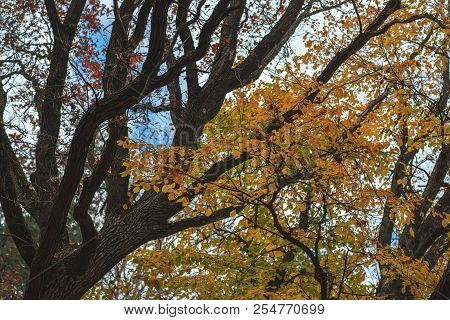 Bright Scenic Branches Of The Large Tree In Fall Forest, Vivid Colorful Nature