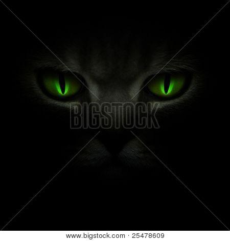 Green cat's eyes glowing in the dark