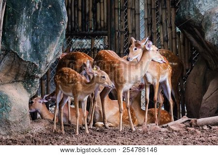 The Beautiful Deer In Nature (wildlife) For Animal Background Or Texture.