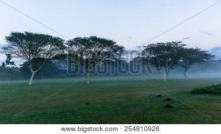 Golf Course fairway trees hole winter dawn mist valley landscape poster