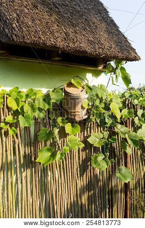 Traditional Rural Landscape Of Village. Green Vine On Wooden Wicker Fence. An Old Wooden Broken Vint