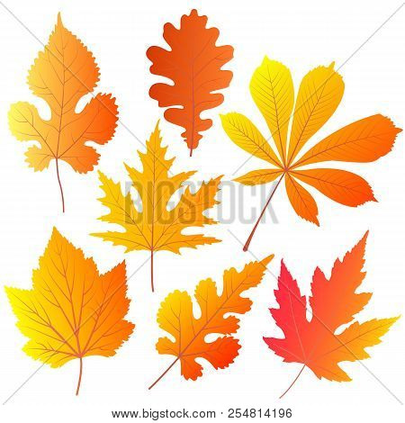 Autumn Leaves Of Chestnut, Oak, Currant, Mulberry, Maple.
