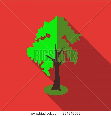 Fluffy Tall Tree Icon. Flat Illustration Of Fluffy Tall Tree Icon For Web