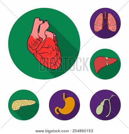 Human Organs Flat Icons In Set Collection For Design. Anatomy And Internal Organs Vector Symbol Stoc