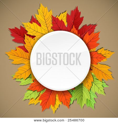 Maple leaves of different colors composition. ready for a text