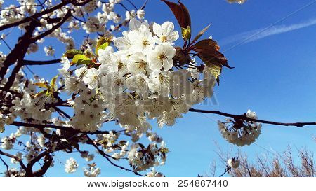 White New Flowers Blooming In A New Spring Day
