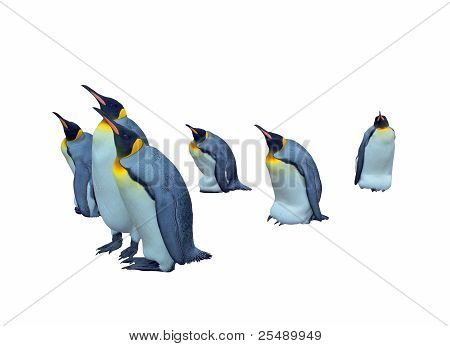 Isolated colony emperor penguins