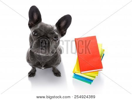 French Bulldog  Dog With   A Tall Stack Of Books ,very Smart And Clever , Isolated On White Backgrou