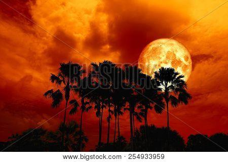 Full Blood Moon Back Silhouette High Palms In Dark Red Orange Night Sky
