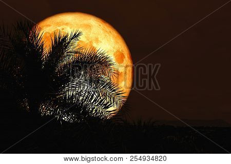 Super Full Blood Moon Back Silhouette In Ancient Palm Tree Night Sky