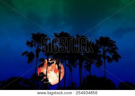 Super Full Red Moon Back Silhouette High Palms In Dark Night Sky