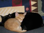Two buddies warm and cozy enjoying a nap poster