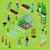 Greenhouse isometric flowchart composition with glasshouse herbs weeding flowers seedlings soil fertilizing irrigation vegetables harvesting vector illustration poster