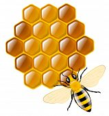 Honey bee and honeycombs poster
