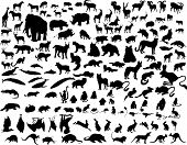 Big collection of different illustration vector animals poster