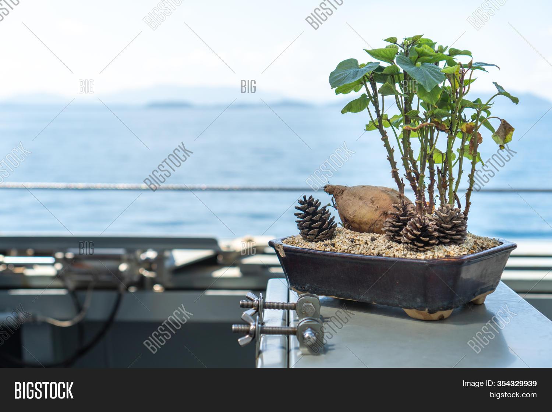 Fleshy Root Leaves Image Photo Free Trial Bigstock