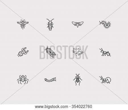 Insect Icons Set. Louse And Insect Icons With Cicada, Hissing Cockroach And Tiger Beetle. Set Of Inv