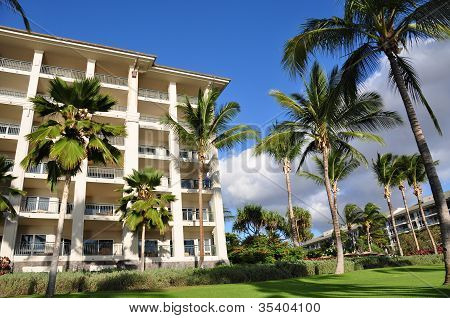 Palm trees and condos, Maui
