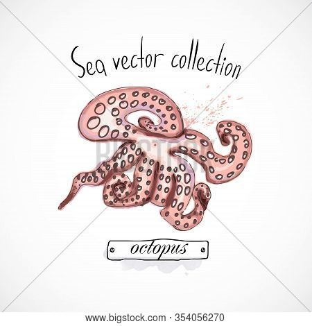 Octopus Seafood Taste For Packing Or Menu Watercolor Spray Seafood Poster On White Background