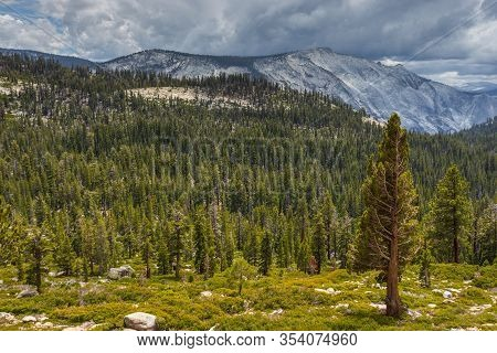 View Of The Sierra Nevada Mountain And Forest. Gray Granite Rocks Of The Massif, The Yosemite Nation