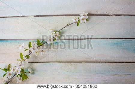 Spring Flower Landscape. Spring Blooming Flowers On A Wooden Background. White Flowers In The Spring