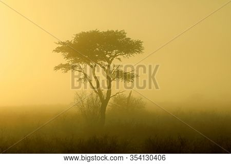 Scenic landscape with a tree in mist at sunrise, Kalahari desert, South Africa