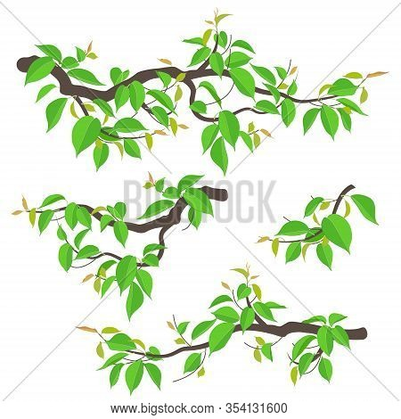 Set Of Simple Tree Branches With Young Green Leaves Isolated On White. Colorful Fresh Foliage In Spr
