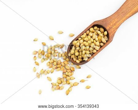 Spice Coriander (coriandrum Sativum) In Wooden Scoop, Isolated On White. Diet And Weight Loss Concep